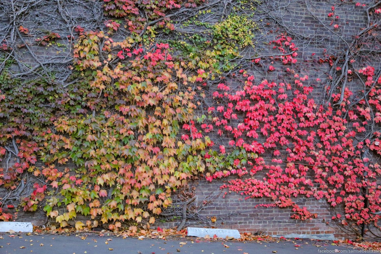 Vse cveta oseni na odnoj stene.