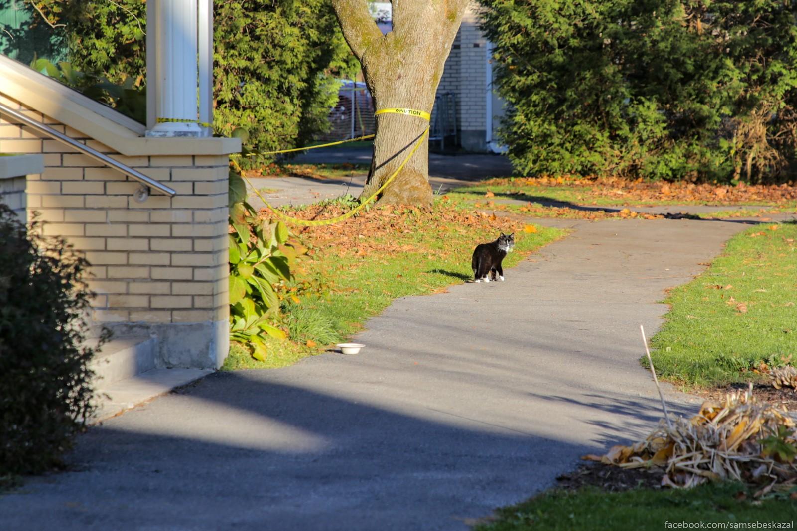 Koty, oni i v Amerike koty. Horoso otkormlennye i ocenʹ nezavisimye. Na kis-kis-kis voobse ne reagiruut.