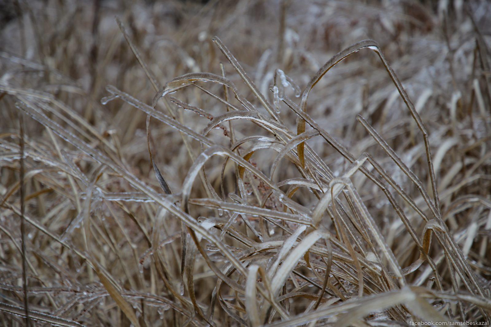 Vysokaa trava budto iz...