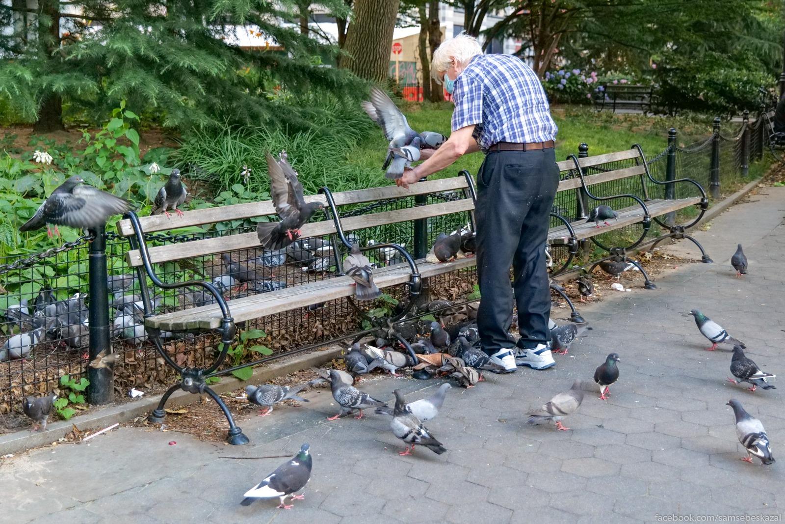 Kormit golubej v parke....