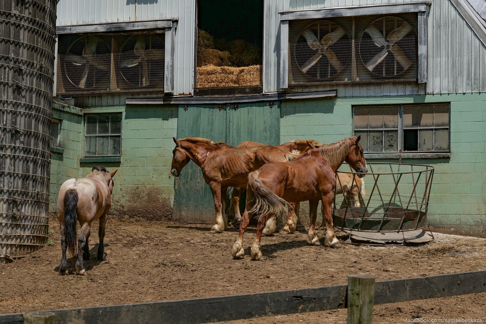 Koni na ferme u mosta zdut...