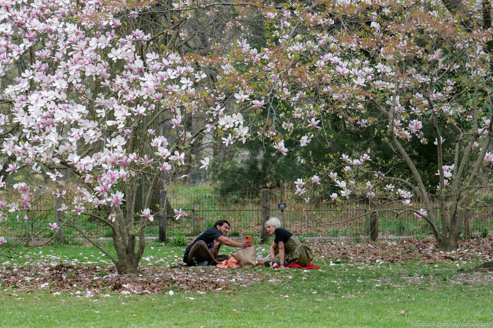Piknik v Central'nom parke.