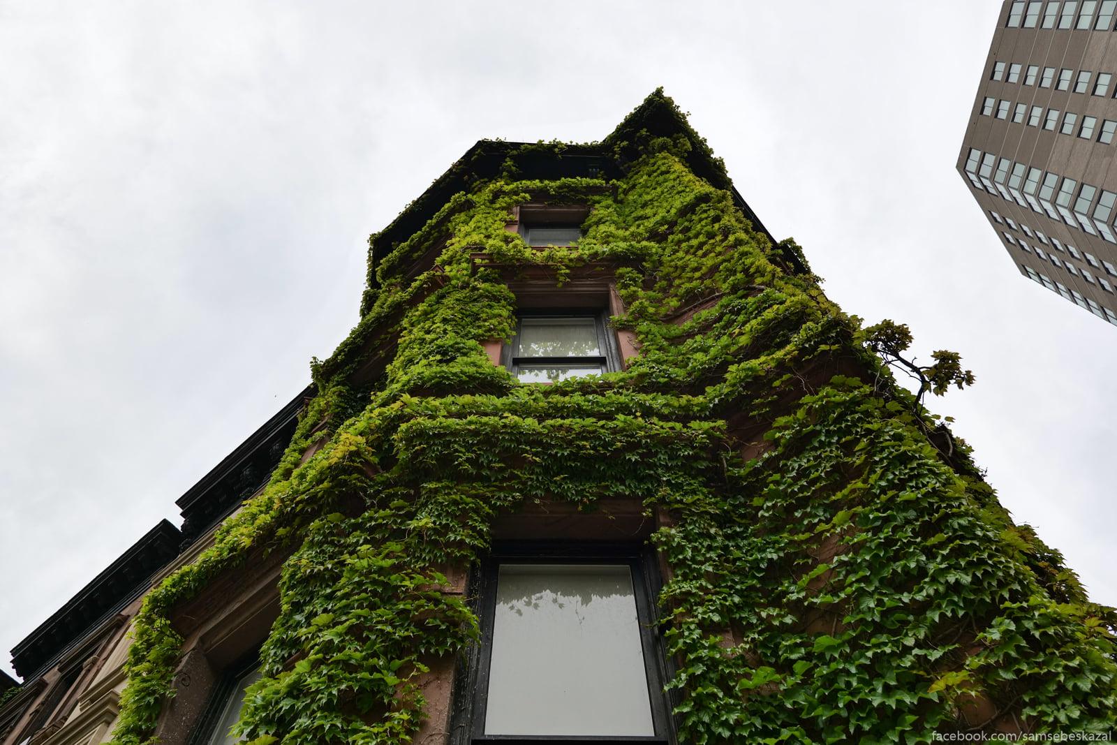 Zelenyj fasad.